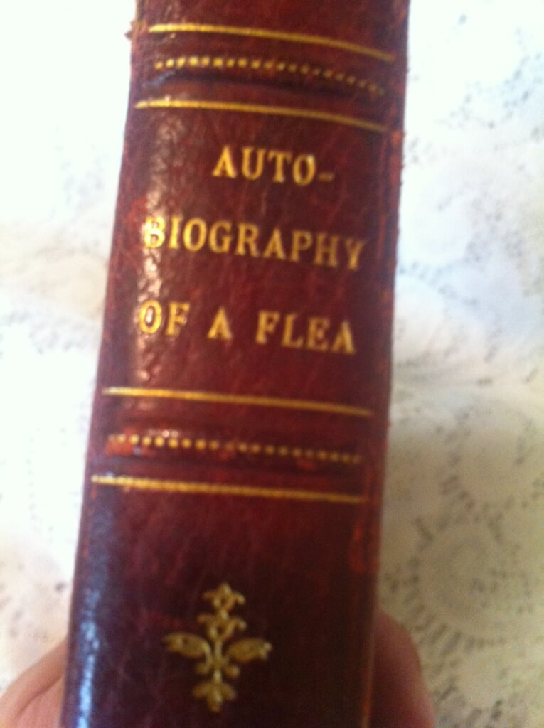 Biography Of A Flea